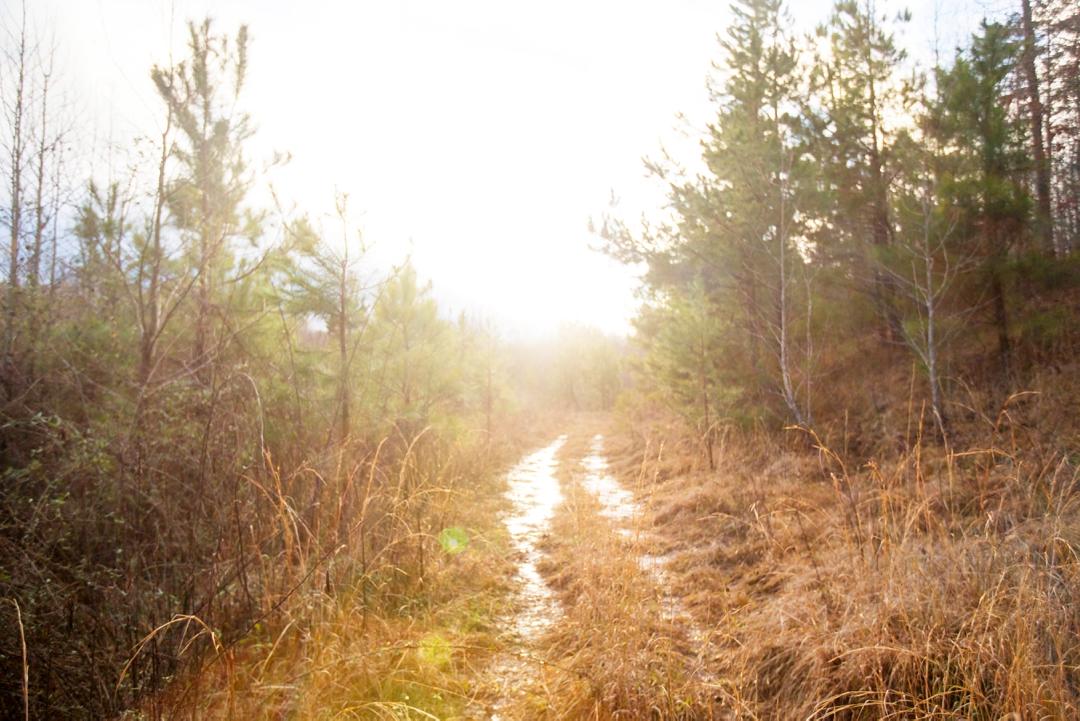 Light Ahead